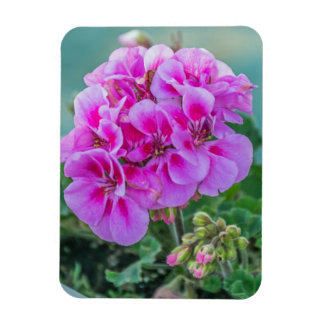 Pink geraniums fridge magnet
