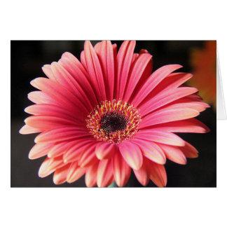 Pink Gerber Card