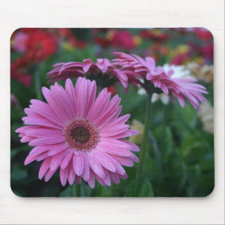 Pink Gerber Daisies colorful mousepad gift idea