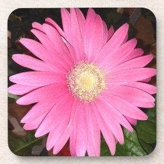 Pink Gerbera Daisy Flower Coaster