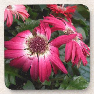 Pink Gerbera Daisy Flowers Coaster