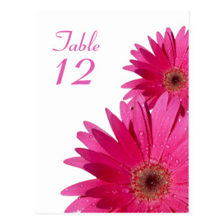 Pink Gerbera Daisy Table Number Card Post Cards