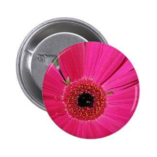pink gerbera flower button