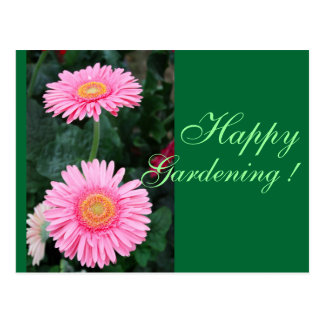 Pink gerbera flowers postcard