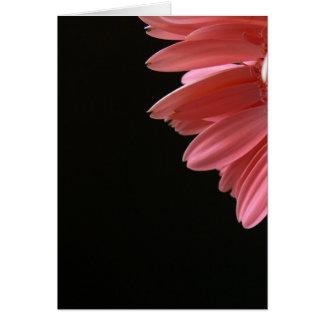 Pink Gerbera on Black Card