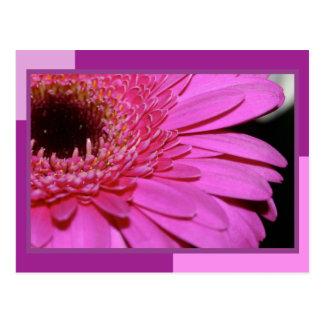 Pink Gerbera Post Card