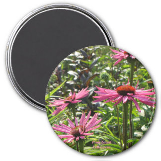 Pink Giant Echinacea Magnet