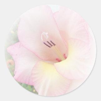 Pink gladiola round sticker