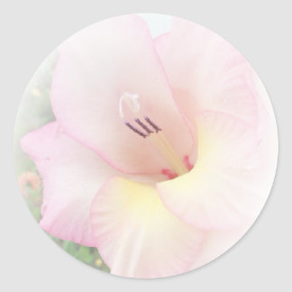 Pink gladiola stickers
