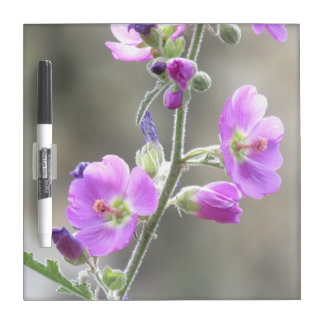 Pink Globe Mallow Wildflowers Dry Erase Board