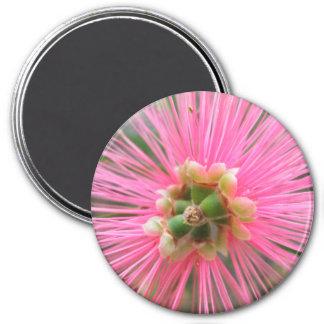Pink Gum Tree Flower Magnet
