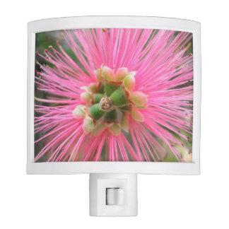 Pink Gum Tree Flower Night Lites
