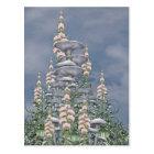 Pink Hedge - Mushroom Club Postcard