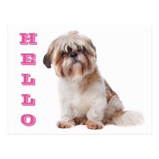 Pink Hello Cream and Brown Shih Tzu Puppy Dog Postcard