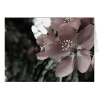Pink Hibiscus Blank Greeting Card