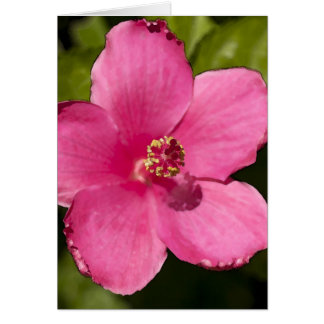 Pink Hibiscus Card