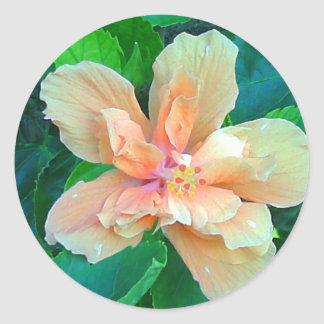 Pink Hibiscus Classic Round Sticker