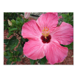 Pink Hibiscus Floral Flower Nature Photo Print Art