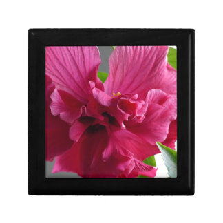 Pink Hibiscus, flourishing alder is gifta Gift Box