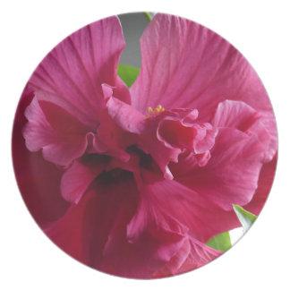 Pink Hibiscus, flourishing alder is gifta Plate