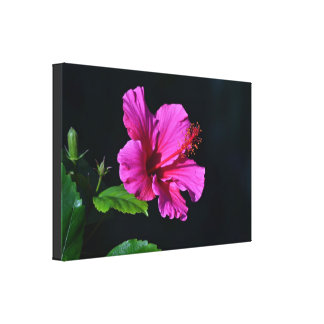 Pink Hibiscus Flower Gorgeous Canvas