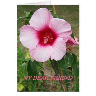 Pink Hibiscus, Friend Card