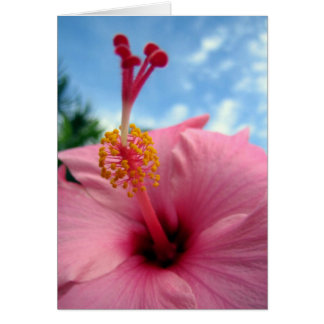Pink Hibiscus Note Card