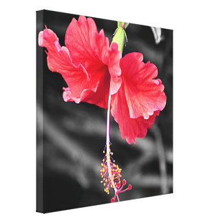 Pink hibiscus with black and white background canvas print