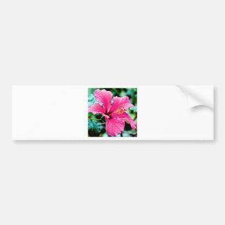 Pink Hibiskus Bumper Sticker