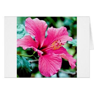 Pink Hibiskus Card