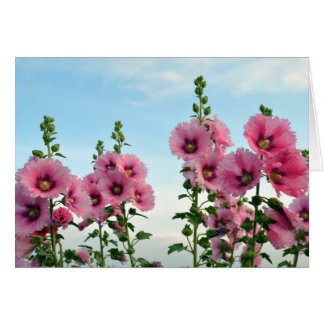 Pink Hollyhock Flowers Card