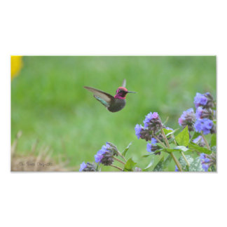 Pink Hummingbird Photo Print