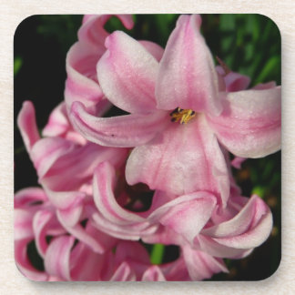 Pink Hyacinth Beautiful Spring Flower Coasters