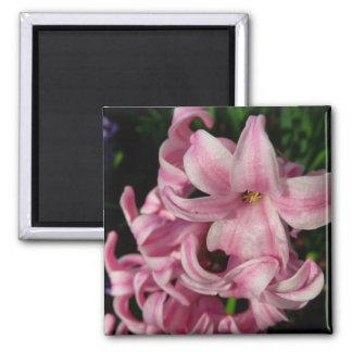 Pink Hyacinth Beautiful Spring Flower Square Magnet