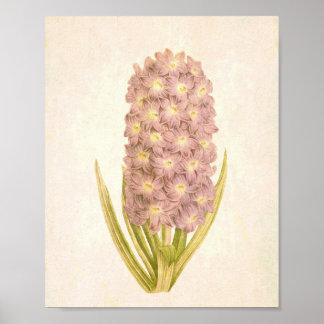 Pink Hyacinths Vintage Floral Print