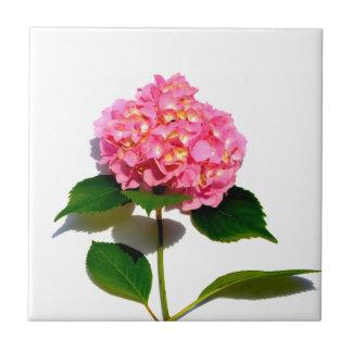 Pink Hydrangea Ceramic Tiles