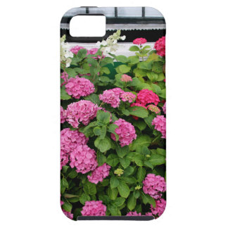 Pink hydrangeas, Holland iPhone 5 Cases