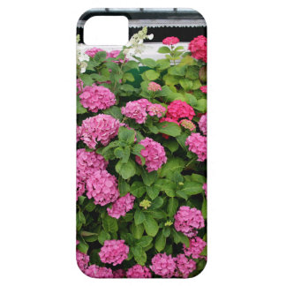 Pink hydrangeas, Holland iPhone 5 Cover