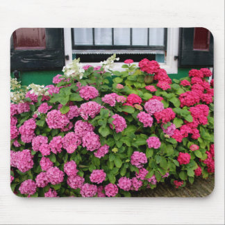 Pink hydrangeas, Holland Mouse Pad
