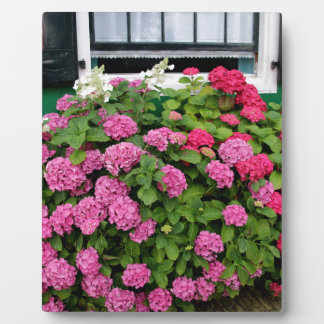Pink hydrangeas, Holland Plaque