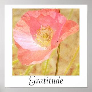 Pink Iceland Poppy Gratitude Poster