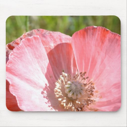 Pink Iceland Poppy III Mousepads