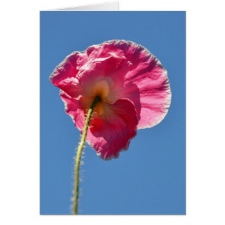Pink Iceland Poppy in the Sky Greeting Card