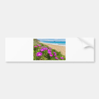 Pink icicle plants at coast in Greece Bumper Sticker