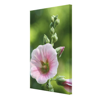 Pink Icing Canvas Print