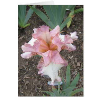 Pink Iris Small Note Card