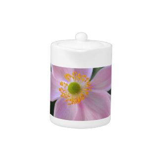 Pink japanese anemone flower