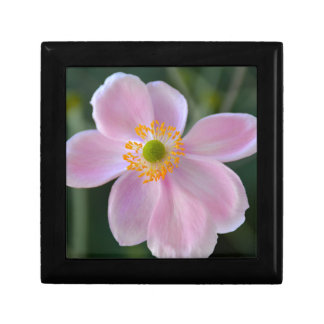 Pink japanese anemone flower gift box