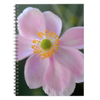 Pink japanese anemone flower notebooks