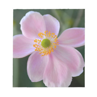 Pink japanese anemone flower notepad